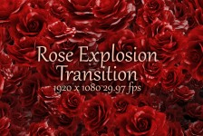 Rose Explosion Transition