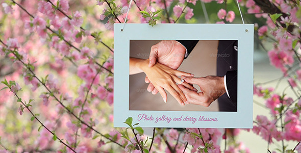 Photo Gallery and Cherry Blossoms